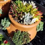 Succulent Pot - New Garden Center 3 18