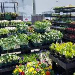 Laurel Ace's New Garden Center 3 18