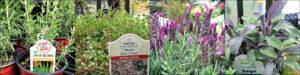 Herb Gardens pt. 1: witches garden