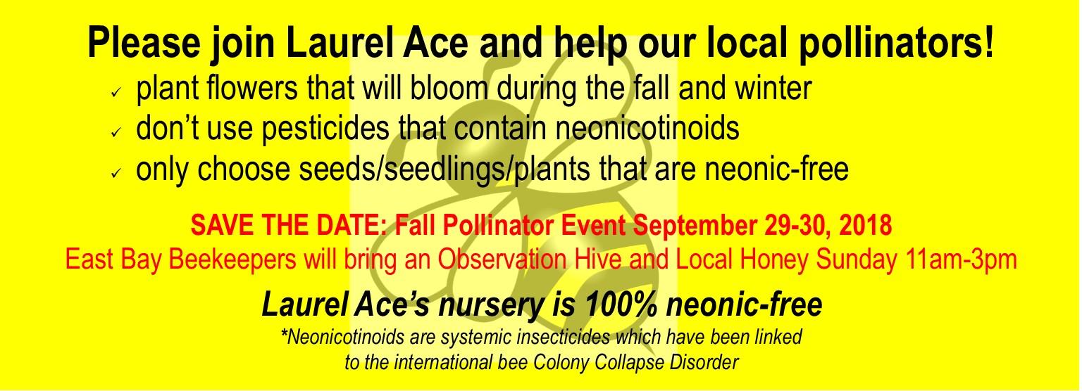 Laurel Ace Fall Pollinator Event