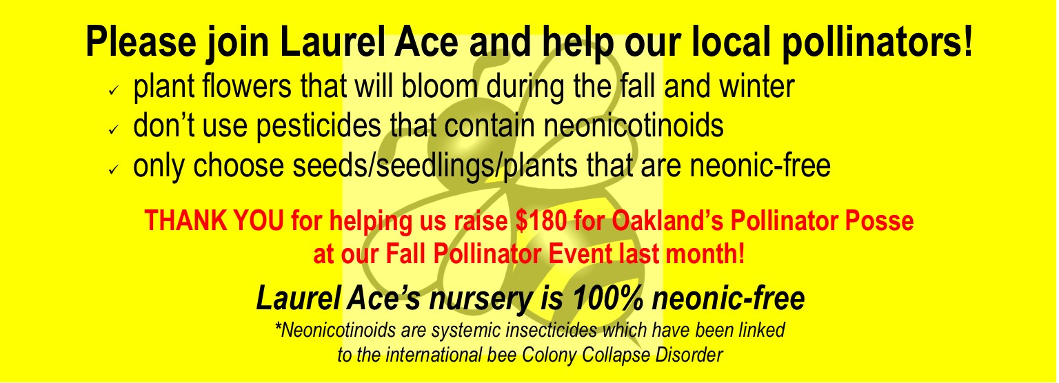 Plant now for the winter pollinators